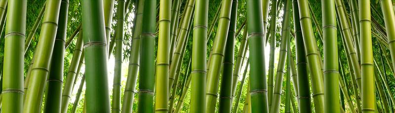 Dense Bamboo Jungle