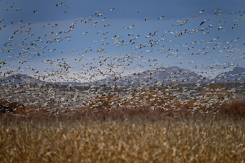 Bosque del Apache Wildlife Refuge, New Mexico