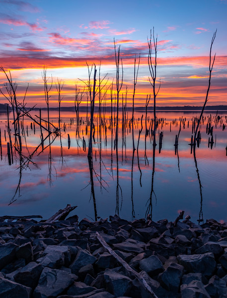 Predawn Colors And Dead Trees Reflecting In The Manasquan Reservoir 11/6/20