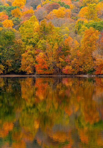 Autumn Colors Reflecting In The Ramapo Reservation 10/22/20