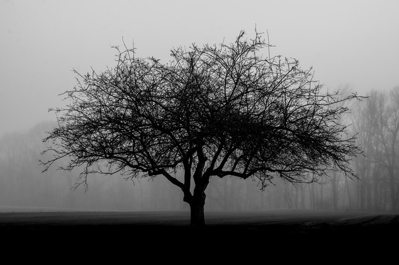 Foggy Tree Silhouette 3/17/16
