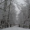 Snowy Trail 3/4/16
