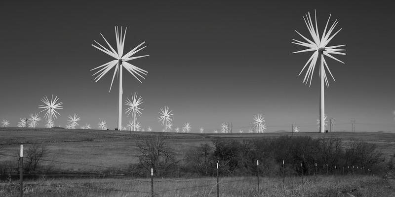 Strange Prairie Flowers
