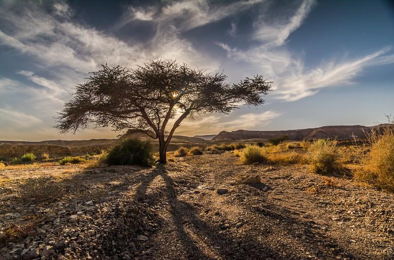 * Desert *
