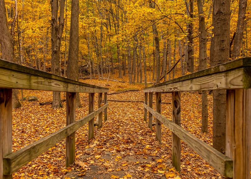 An Autumn Walkway 10/22/20