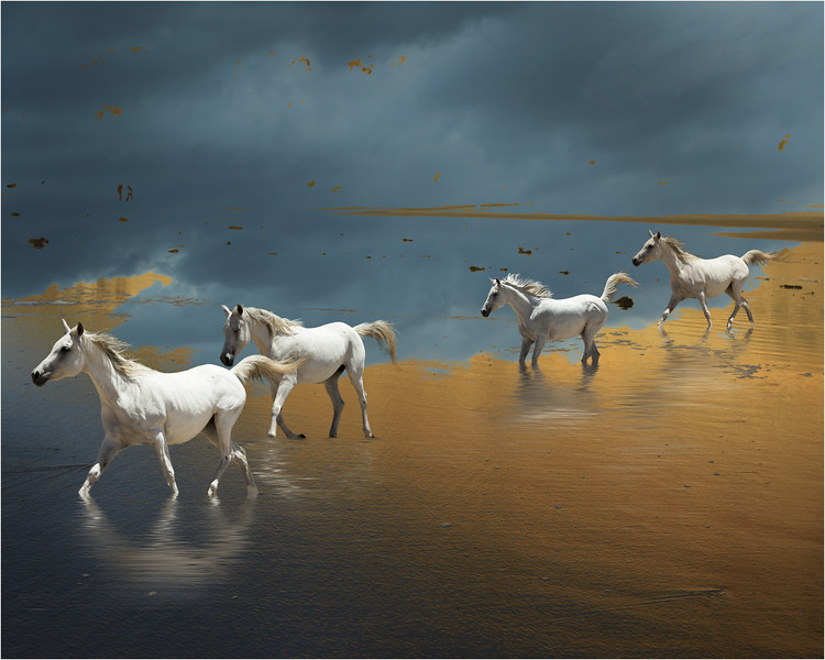 Horse pleasure