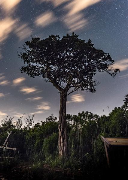 Tree Silhouette with Night Sky 6/2/17