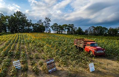 Old Truck in a Sunflower Field 9/2/18