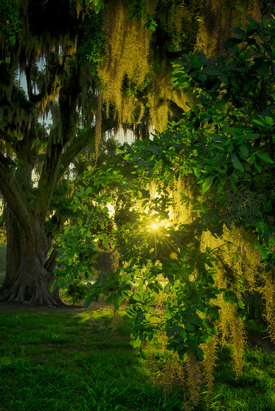 "ETC-3123  ""Backlit Tree in Green"""