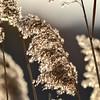 Sea Grass at Shark River, Belmar, NJ