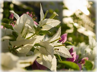 |Bunga Kertas|