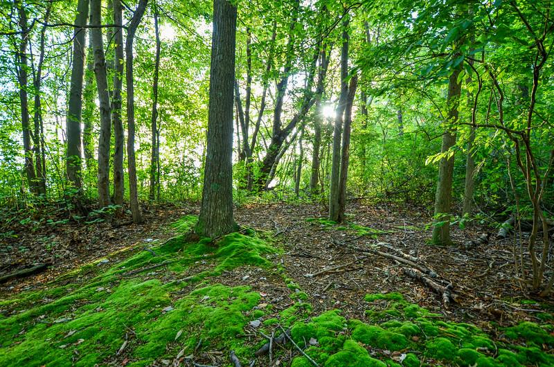 Green Scene, Manasquan Reservoir, Howell, NJ