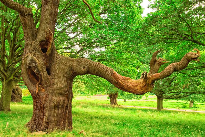 Tree in Richmond Park