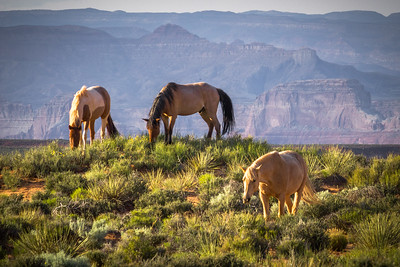 Glenn Canyon Horses
