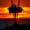 A Fiery Sunset Silhouetting An Active Osprey Nest 6/13/20