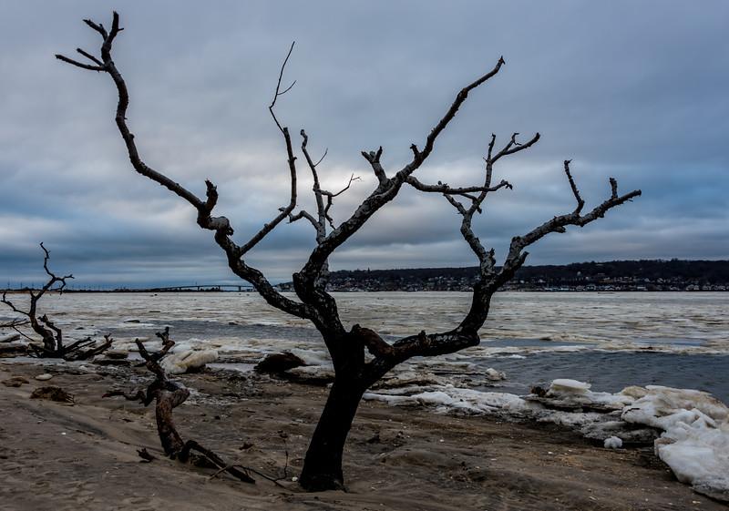 A Lone Tree in Sandy Hook Bay 1/13/18