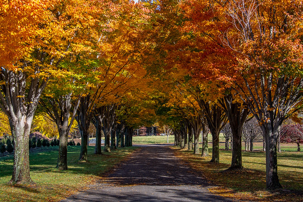 Autumn Driveway 11/3/18