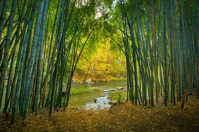 Bamboo Grove Exit, Cherokee NC