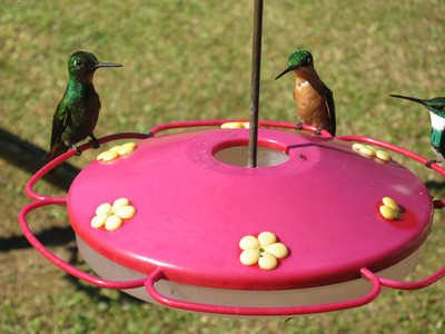 Humming                                                  Humming Birds Chat