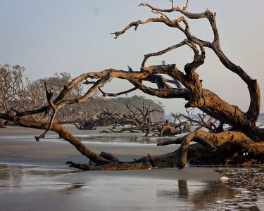 Driftwood Framed