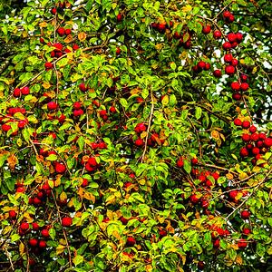Natures Fruits