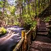 Forest Pathway, Bushkill Falls, PA