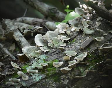 Summer mushrooms