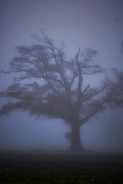 Un Arbe Dans Le Brouillard Dense