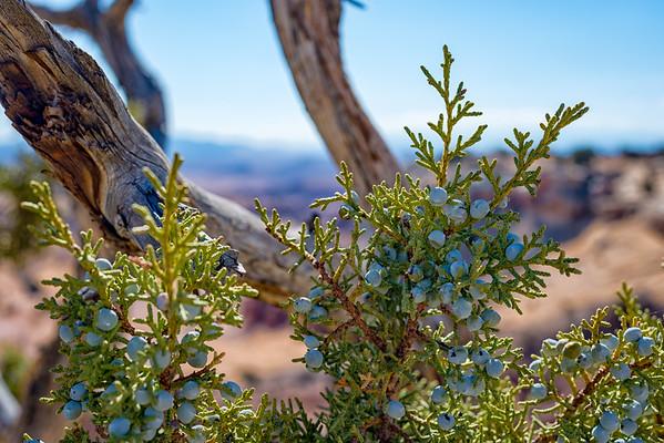 Berries - Utah-2