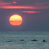 Sunrise With Dolphins Frolicking In The Surf 7/14/18
