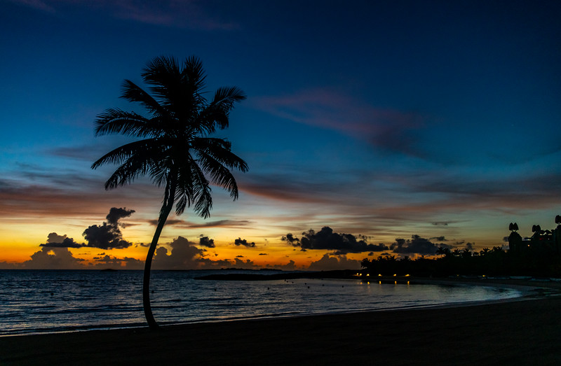 Predawn Color Over Palm Tree on Beach 7/18/19