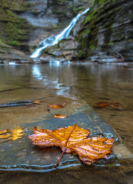 A Leaf on a Rock at Lucifer Falls in Tremen State Park, NY 10/16/17