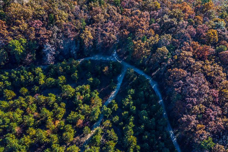 Autumn Treetops 11/4/18