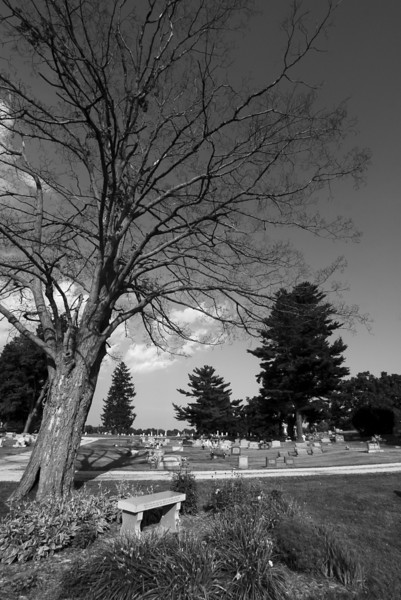 """Dead People Need Dead Trees""<br /> This photo received 2nd in the Professional Division.  <br /> I overheard some interesting (mostly negative) comments at the event regarding my title.  I thought it was clever. Made a nice Black and White print."