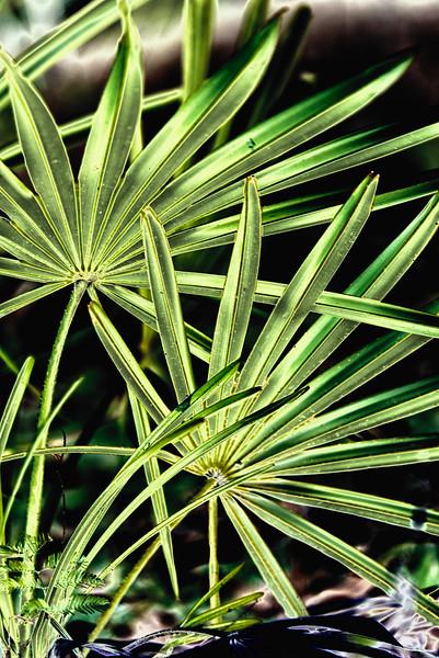 "ETC-3171  ""Golden Palm Fronds"""