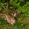 Hiding in the Brush