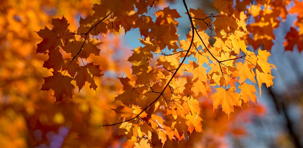 High Park Leaves #2 2015