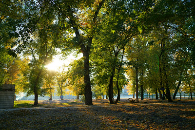 Trees along Dnieper river, Ukraine