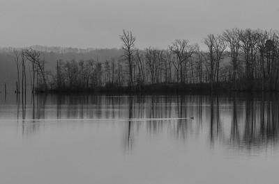 A Foggy Morning at Manasquan Reservoir 2/18/19