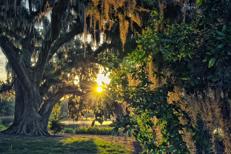 "ETC-3472  ""Morning Sunburst Through Tree and Moss"""