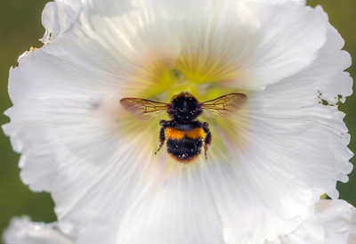 Bee Symmetry