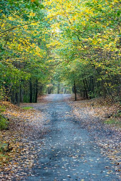 Autumn Trail at Manasquan Reservoir 10/23/17