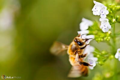 macro bee-0112fin