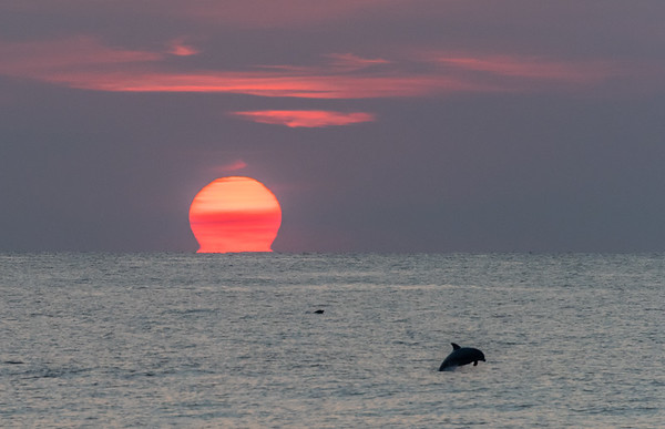 The Sun Tearing Away From The Horizon With Dolphins Frolicking In The Surf, Jersey Shore, NJ 7/14/18