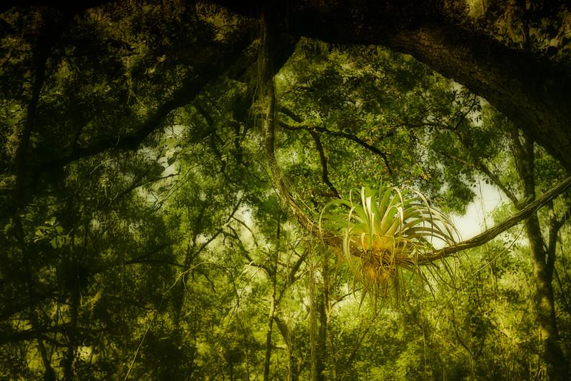 "ETC-3108  ""Plant on a Vine"""