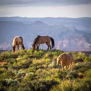 Glen Canyon Horses