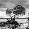 Joshua D Weiss Fine Art Photography of Lone Tree on Havelock Island in Andaman India