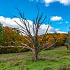 Mohonk Preserve Tree 10/24/18