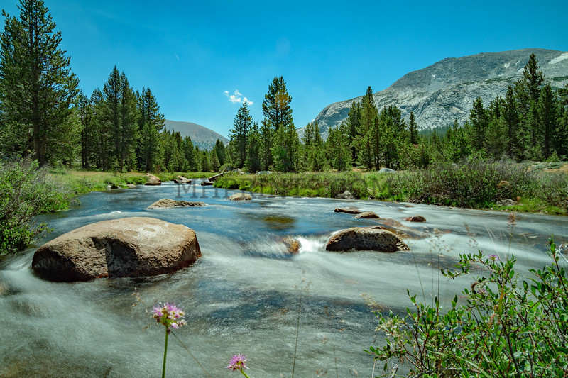 Dana Meadow, Yosemite