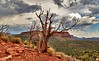 Dead hardwood tree on side of mountain